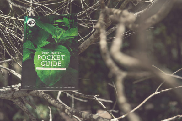 Bush Tucker Pocket Guide